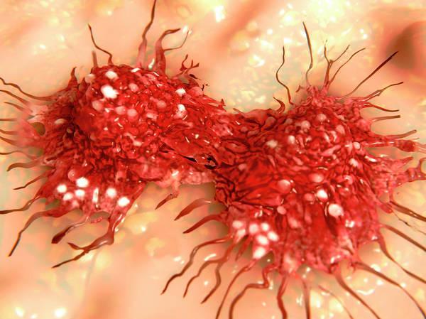 Wall Art - Photograph - Dividing Cancer Cell, Illustration by Juan Gaertner