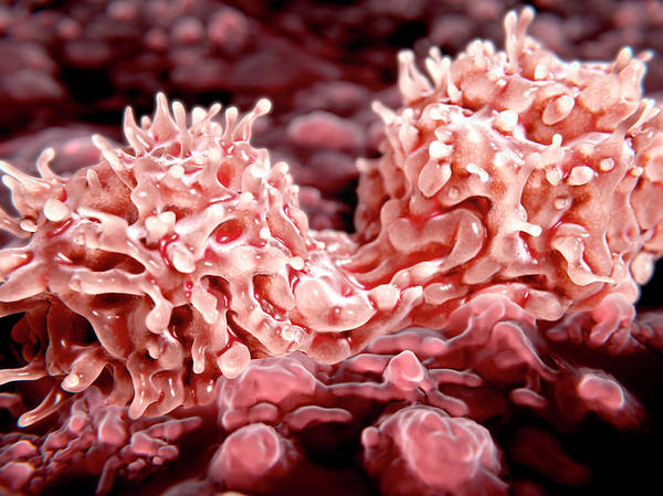 Wall Art - Photograph - Dividing Stem Cells, Illustration by Juan Gaertner