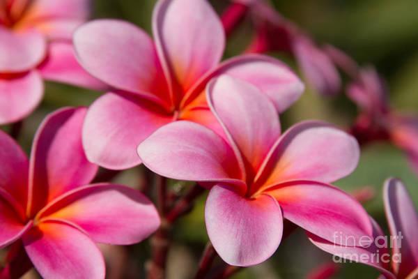 Photograph - Divine Joy by Sharon Mau