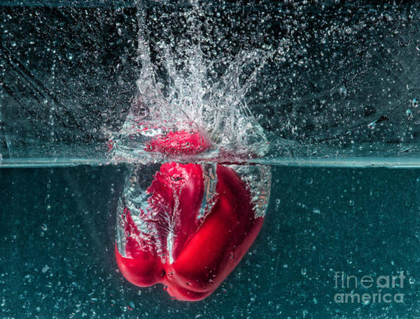 Photograph - Diving Pepper by Les Palenik