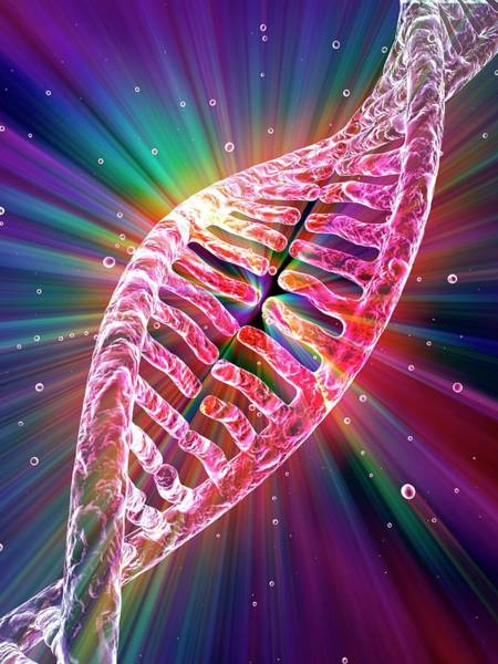 3d Model Photograph - Dna by Alfred Pasieka