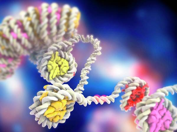 Protein Wall Art - Photograph - Dna Compaction And Histones by Ramon Andrade 3dciencia