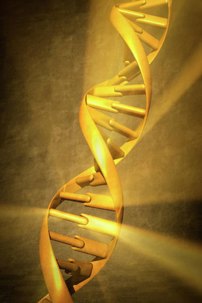 Physical Photograph - Dna Double Helix by Gary S Chapman