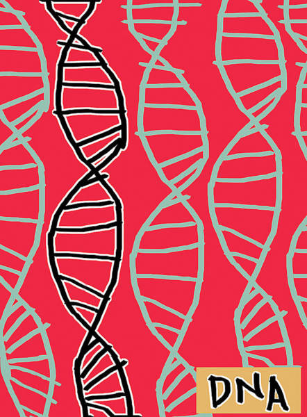 Double Helix Photograph - Dna Helices by Anna Wright/science Photo Library