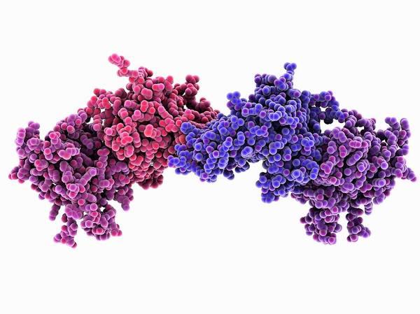 Dna Methyltransferase Molecule Art Print
