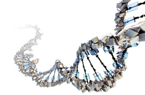 Wall Art - Photograph - Dna Molecule by Hybrid Medical Animation/science Photo Library