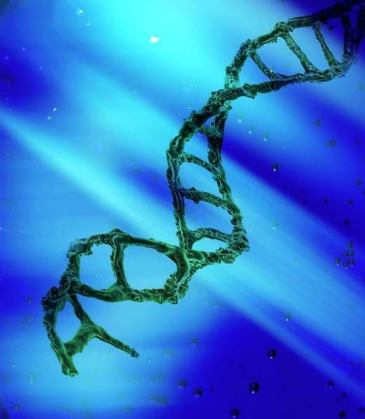 Genetic Material Photograph - Dna Molecule by Richard Kail