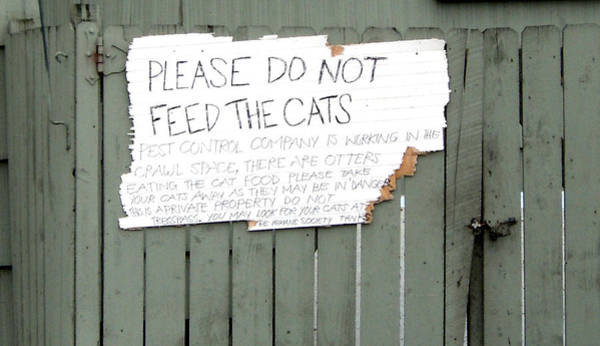 Photograph - Do Not Feed The Cats by Sherry Shipley