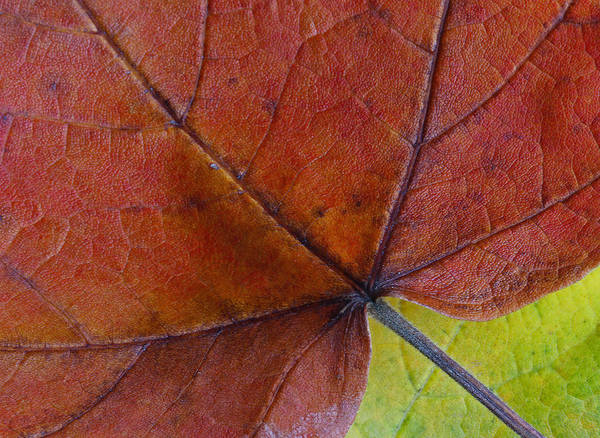 Photograph - Do Not Leaf Me Now by Juergen Roth