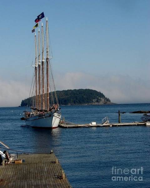 Photograph - Docked In Bar Harbor by Donna Cavanaugh