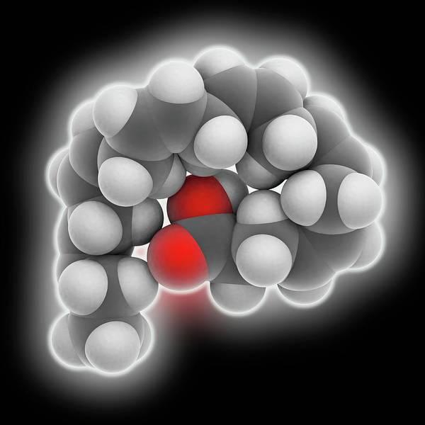 Fatty Tissue Photograph - Docosahexaenoic Acid Molecule by Laguna Design