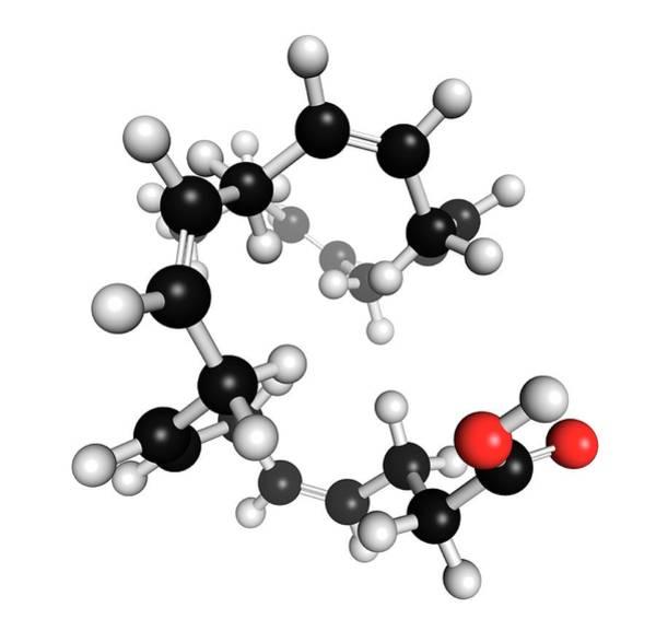 Omega Photograph - Docosahexaenoic Acid by Molekuul