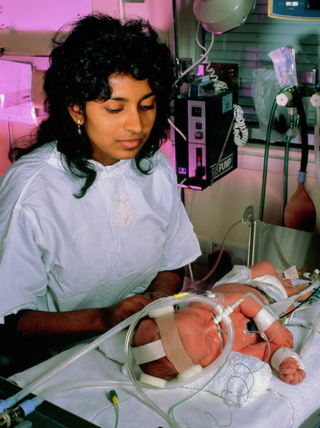 Newborn Photograph - Doctor Examining A Newborn Baby In Intensive Care by Simon Fraser/department Of Child Health, Rvi, Newcastle/science Photo Library