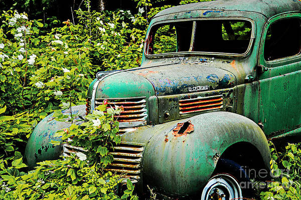 Photograph - Dodge Truck by Alana Ranney