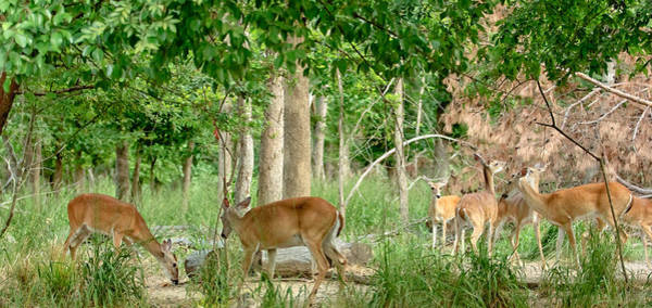 Photograph - Doe Watching by Kim Henderson