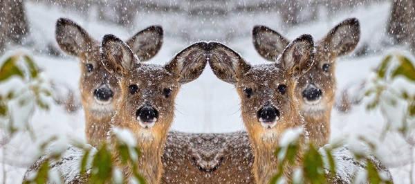 Doe Photograph - Doe You See Me by Betsy Knapp