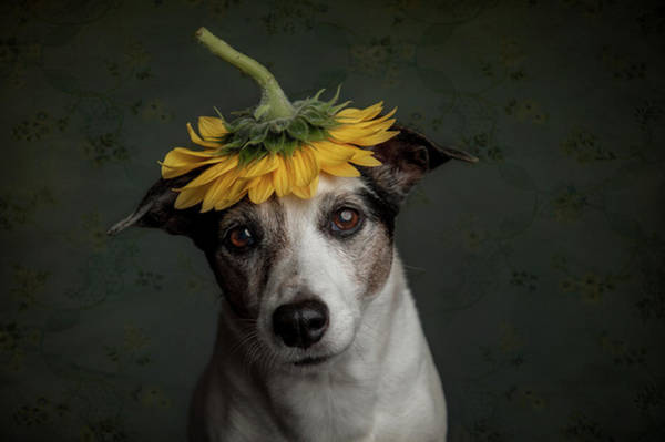 Lady Photograph - Does She Realize She Looks Like A Sunflower.... by Heike Willers