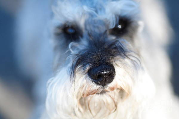 Photograph - Dog 2 by Wingsdomain Art and Photography