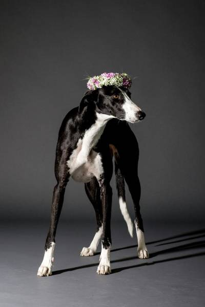 Stand Out Wall Art - Photograph - Dog And Flower Wreath by Photostock-israel