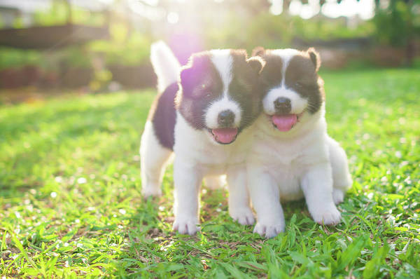 Photograph - Dog And Puppies by Primeimages
