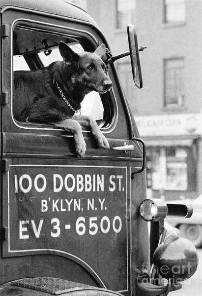 Photograph - Dog And Truck In Brooklyn by Winston Vargas