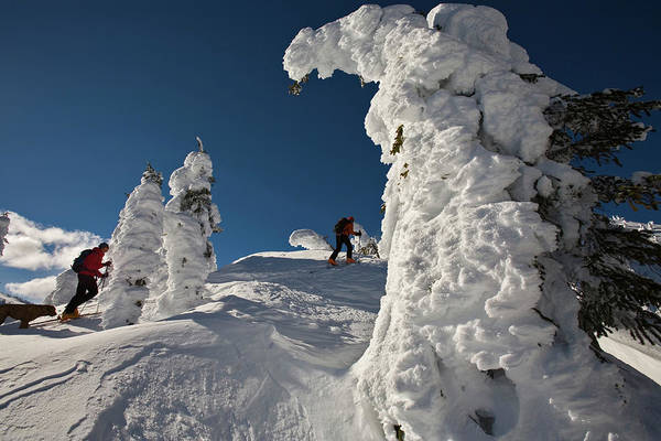 Jasmin Photograph - Dog And Two People Ski Touring by Whit Richardson