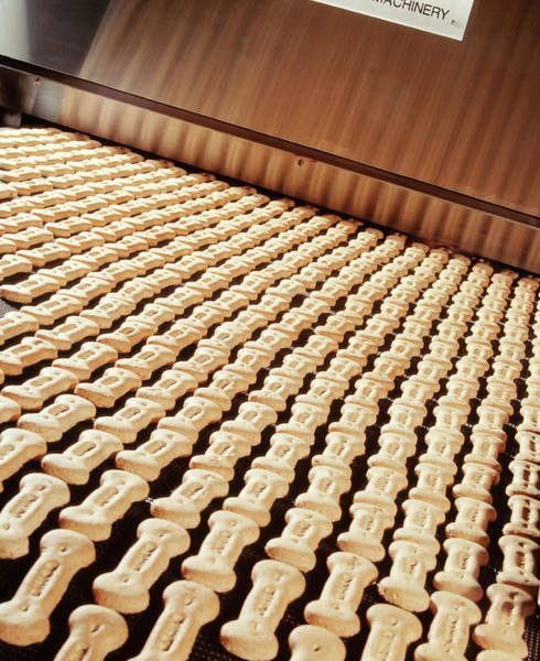 Dog Biscuit Photograph - Dog Biscuit Manufacture by Steve Allen/science Photo Library