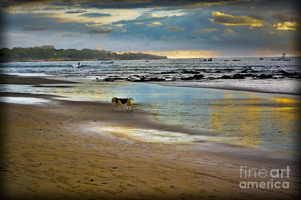 Photograph - Dog Day Afternoon by Gary Keesler