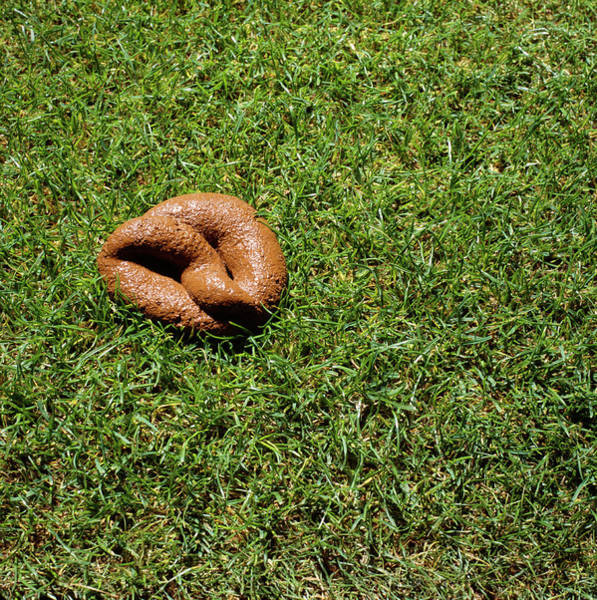 Wall Art - Photograph - Dog Faeces by Kevin Curtis/science Photo Library