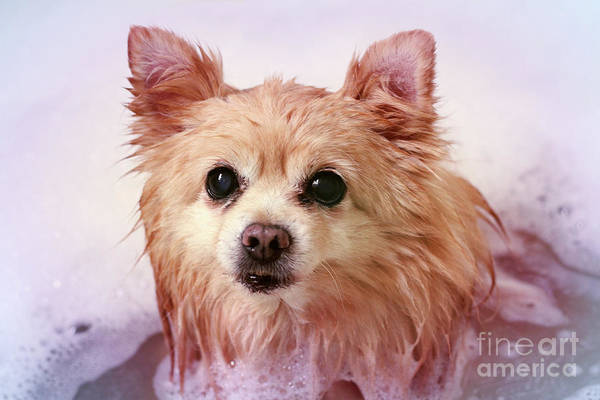 Wall Art - Photograph - Dog In Bath by Charline Xia