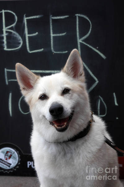 Wall Art - Photograph - Dog In Front Of Pub by Charline Xia
