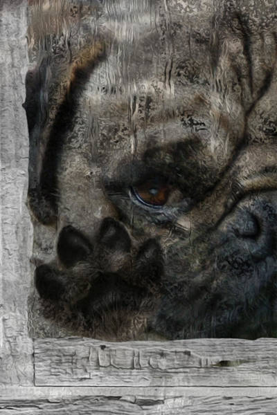 Imagery Digital Art - Dog In The Window by Jack Zulli