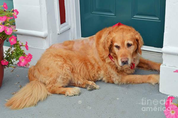Halifax Nova Scotia Digital Art - Dog In Waiting by Eva Kaufman