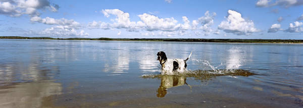 Wall Art - Photograph - Dog Jumping In Water, Pomene, Mozambique by Animal Images