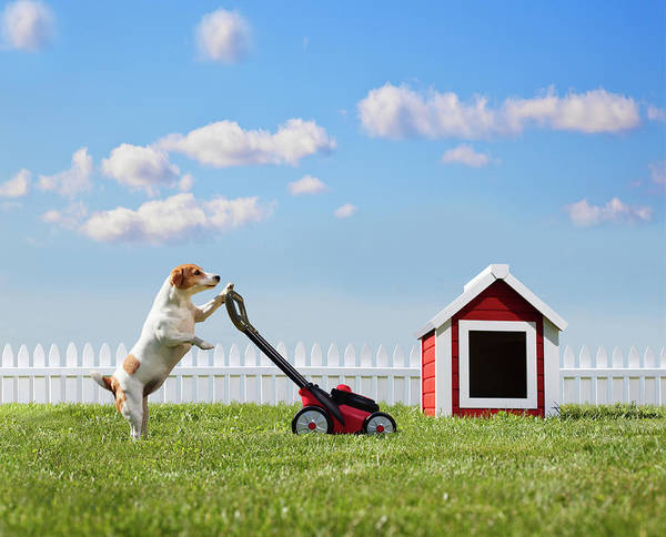 Dog Mowing Lawn Near Dog House Art Print by Pm Images