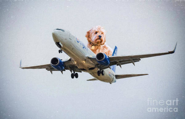 Photograph - Dog Pilot by Les Palenik