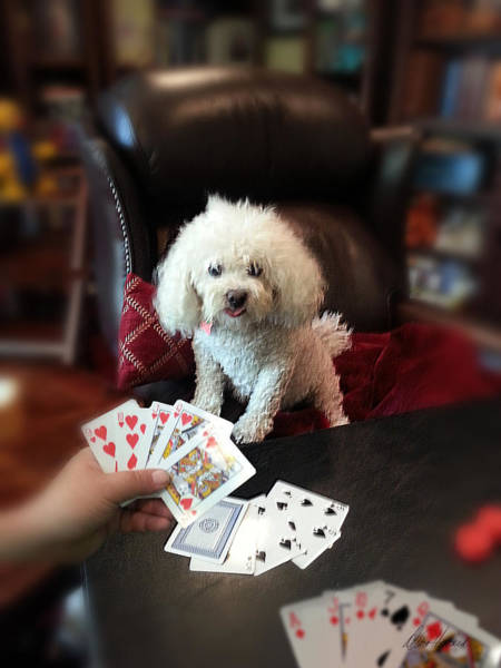 Photograph - Dog Playing Poker by Diana Haronis