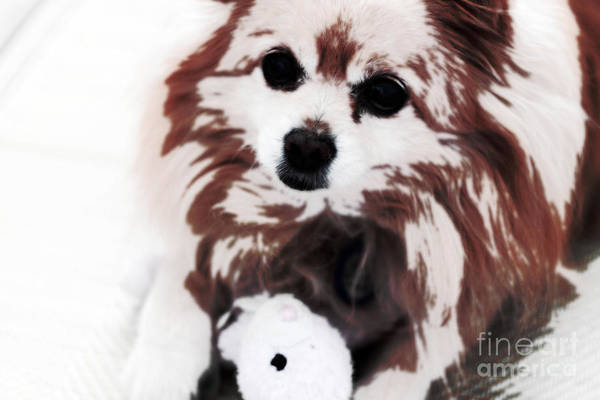 Naughty Dog Wall Art - Photograph - Dog Playing With Toy by Charline Xia