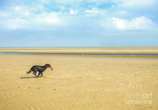 Dog Running On A Beach Art Print