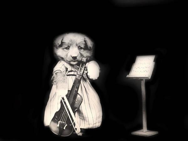 Violin Wall Art - Photograph - Dog Serenade by Mountain Dreams