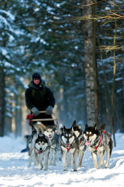 Quebec Photograph - Dog Sledding, Quebec by Doug Mckinlay