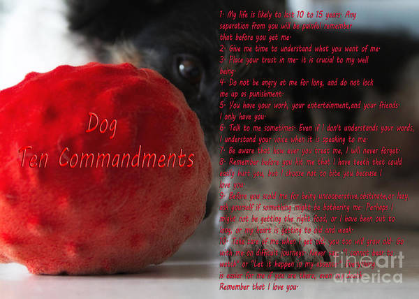 Wall Art - Photograph - Dog Ten Commandments by Stelios Kleanthous