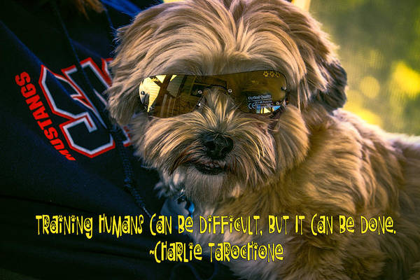 Digital Art - Dog Training Humans by Kathy Tarochione