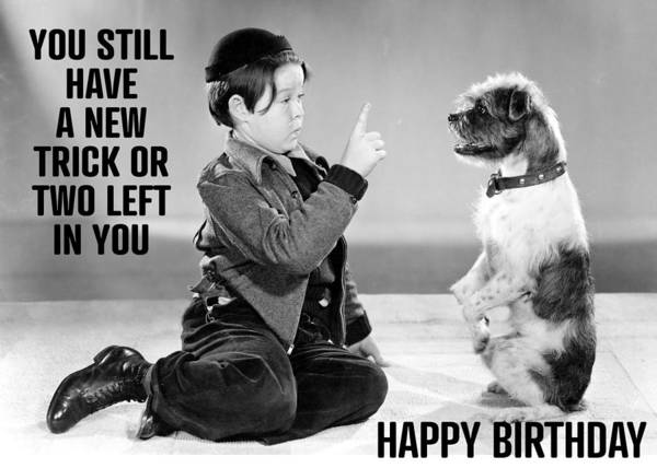 Wall Art - Photograph - Dog Trick Birthday Greeting Card by Communique Cards
