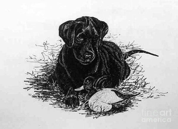 Duck Hunting Drawing - Scratch Board Puppy Art by Ronald Gater