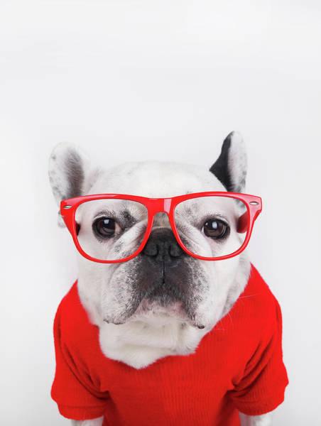 French Bulldog Photograph - Dog With Eyeglasses by Retales Botijero