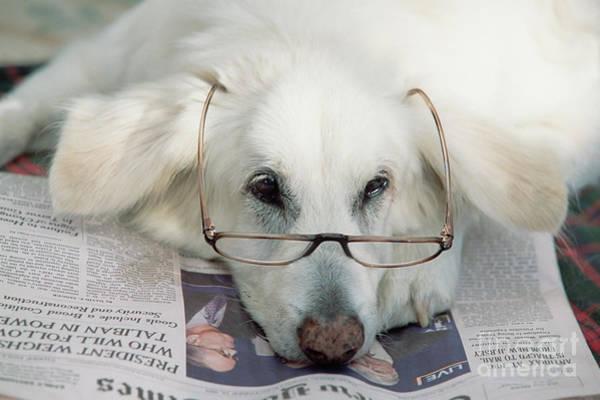 Photograph - Dog And The News by Yva Momatiuk John Eastcott