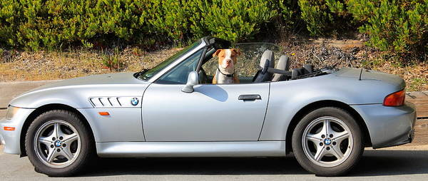 Wall Art - Photograph - Top Down Dog, Monterey by Michael Cervin