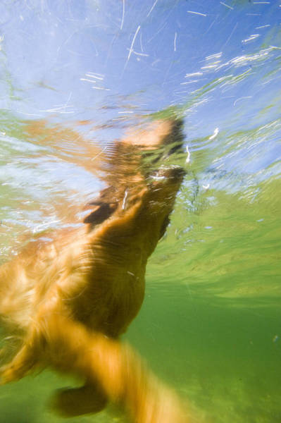 Fetch Photograph - Dog With Stick In Lake, Idaho by Gabe Rogel