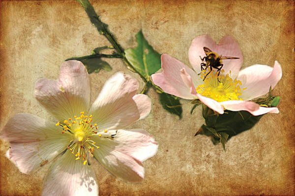 Photograph - Dogged Insect by David Davies